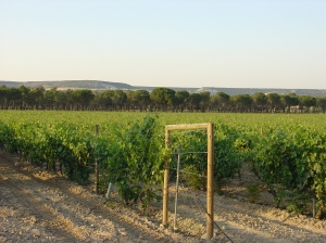 Ribera del Diero Vineyards