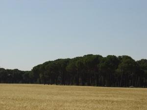 Iscar landscape